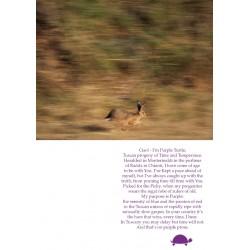 Purple Turtle fairy tale